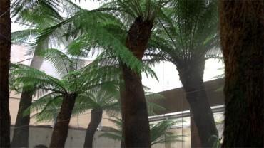 Los helechos gigantes que formarán parte del Bosque del Carbonífero ya crecen en Ciuden Vivero