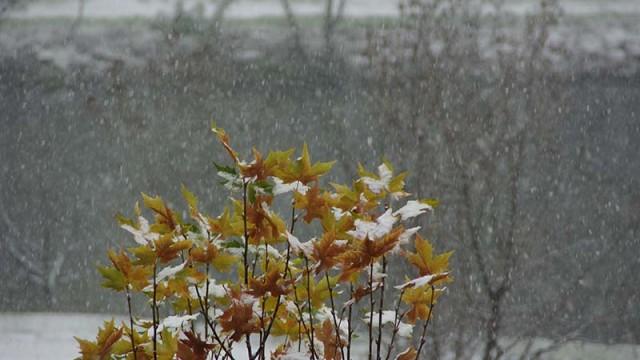 La Delegación del Gobierno activa la fase de alerta por nevadas en seis provincias