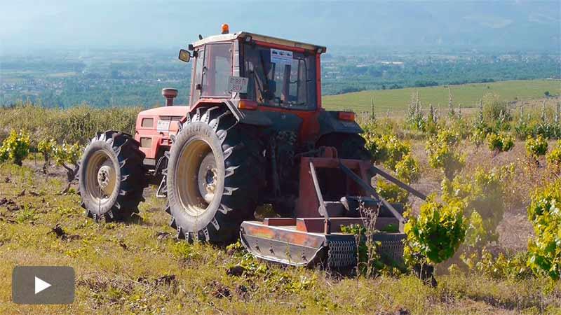 El consorcio Castro Bergidum arranca las viñas de Castro Ventosa para facilitar una visión del Bierzo Bajo de 360º