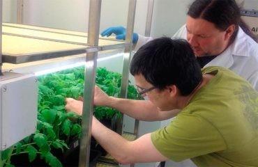 Revistas internacionales publican los trabajos realizados en el Campus de Ponferrada sobre las habilidades del hongo Trichoderma