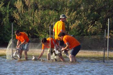 La Junta prepara la convocatoria de voluntariado ambiental para 2016