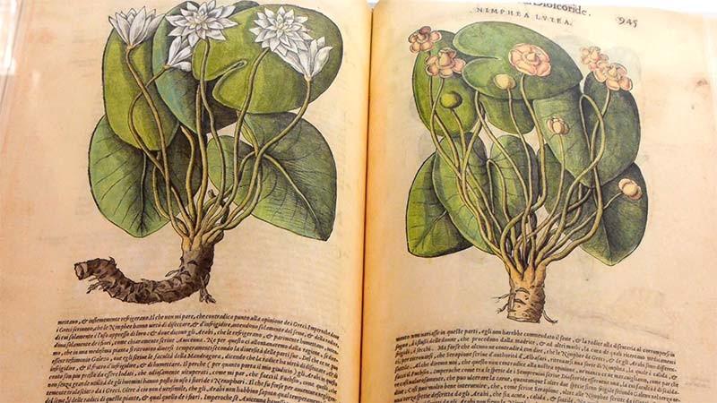 """La exposición """"Libros de plantas mágicas y animales raros"""" se amplía al 13 de marzo"""