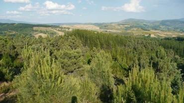 SECF premia el trabajo de Gorka Lago sobre el brote de Lymantria en Fresnedo