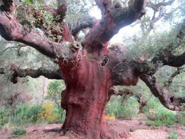 La Casa del Parque Las Médulas celebra el Día del Árbol con una ruta por el páramo de los Zufreiros del Frade