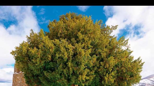 """A Morteira presenta """"Entre amigos"""" un libro para dar a conocer los árboles monumentales de Ponferrada"""