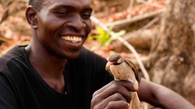 Humanos y pájaros cooperan en Mozambique para buscar miel y cera