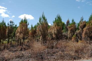 Medio Ambiente instalará en el Bierzo 10 cámaras térmicas y de alta definición para vigilar los montes