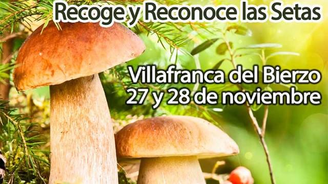 Recoge y reconoce las setas en las XI Jornadas Micológicas de Villafranca