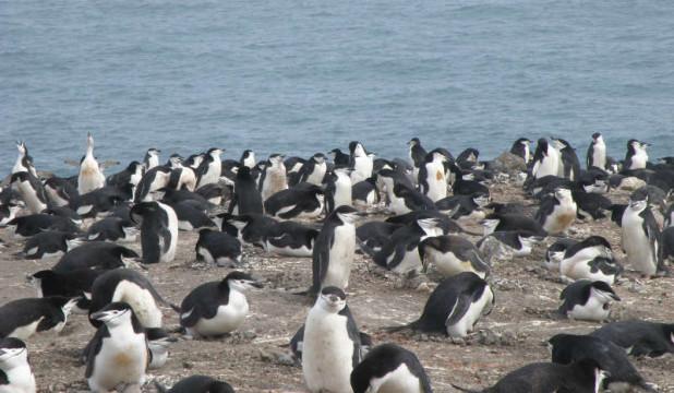 pinguinos-antartida.jpg