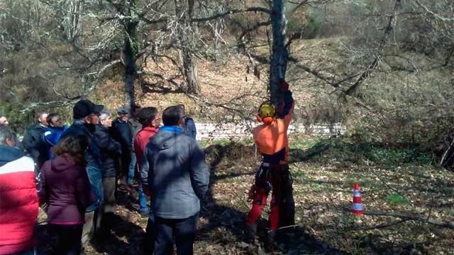 La Asociación de Castañicultores los Tres Valles organiza una asamblea informativa
