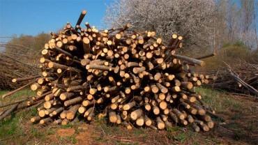 Jornada sobre empleabilidad y emprendimiento en el sector forestal