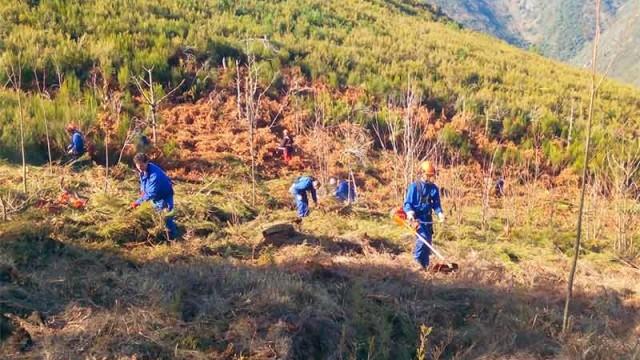 Los alumnos del taller Ancares V  de Villafranca del Bierzo recuperan el monte Peña de la Marquesa