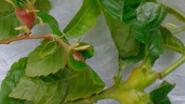 Tres Valles organiza una jornada informativa sobre la avispilla en Vega de Valcarce