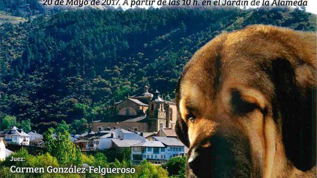 Villafranca del Bierzo acoge el V Concurso Monográfico de Mastín Español