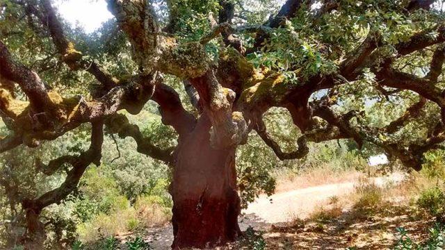 La Casa del Parque las Médulas organiza una ruta guiada por el páramo-Zufreiros del Frade