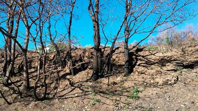 El incendio del Valle del Oza deja al descubierto 30 niveles de terrazas que podrían estar relacionadas con la Tebaida