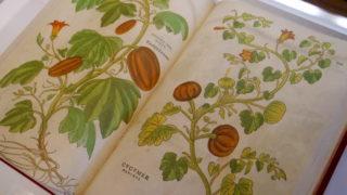 El otoño deshoja los libros más bellos de Templum Libri