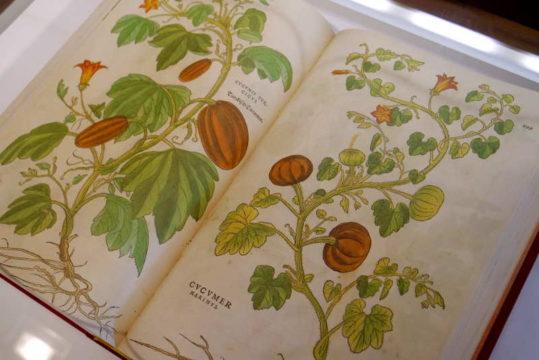 templum-libri-expo-otono.jpg