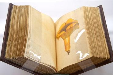 Nueva visita comentada a la exposición temporal 'El otoño deshoja las  páginas de los libros más bellos del Castillo'