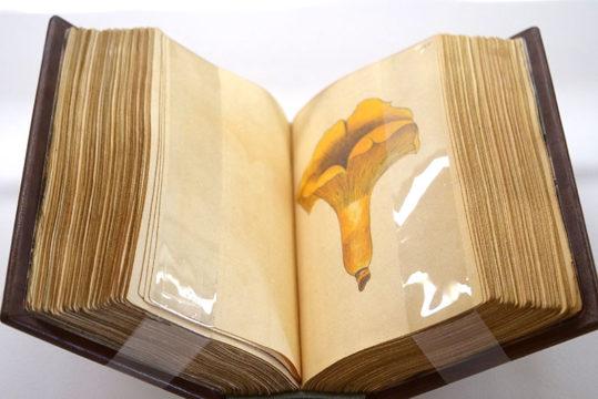 templum-libri-otono.jpg