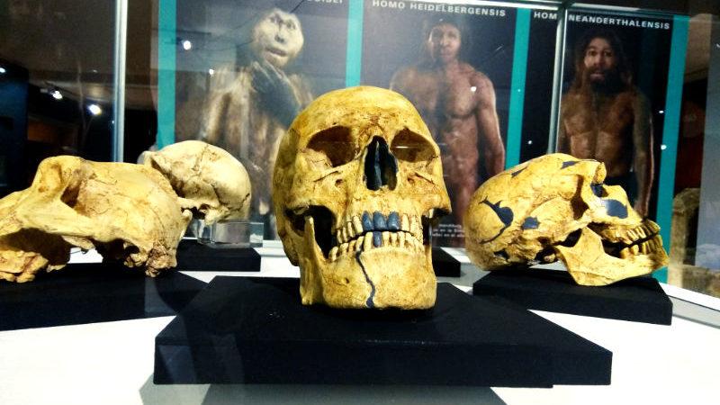 El MARCA hace un recorrido por la prehistoria con la exposición 'Cavernarios'
