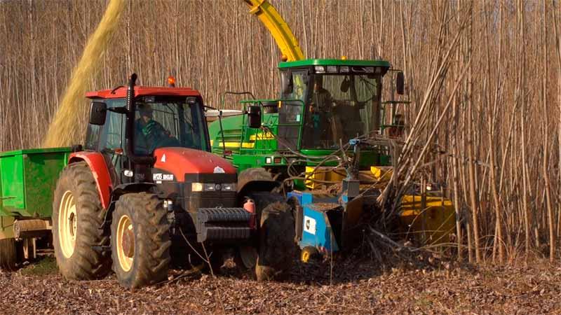Corta de chopos para biomasa en Magaz realizada por CIUDEN. Foto Bierzotv