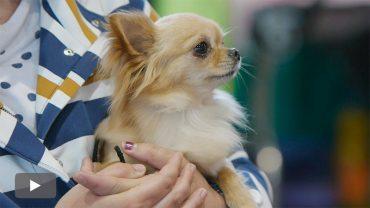 2016050801_concurso-nacional-canino-bierzo_p.jpg