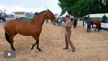 2018051301_feria-caballo-campoanraya_p.jpg