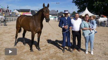 2019051102_feria-del-caballo-camponaraya_p.jpg