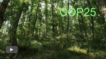 2019121102_mitigacion-del-cambio-climatico-oportunidad-bosques_p.jpg