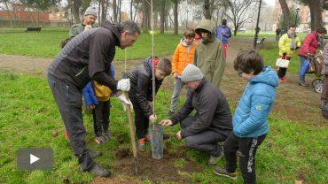 2019122701_amorteira-plantacion-olmos-cuatrovientos_p.jpg
