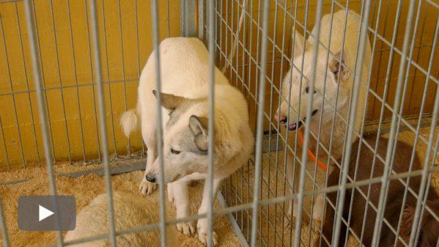 20200308_feria-perros-caza-camponaraya_p.jpg