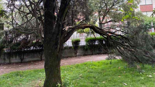 arbol-plantio.jpg