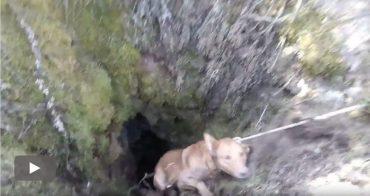 bomberos-ponferrada-rescate-perros_play.jpg