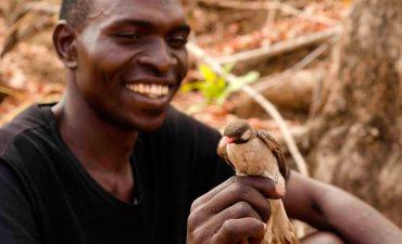 cazador-de-miel-en-mozambique.jpg