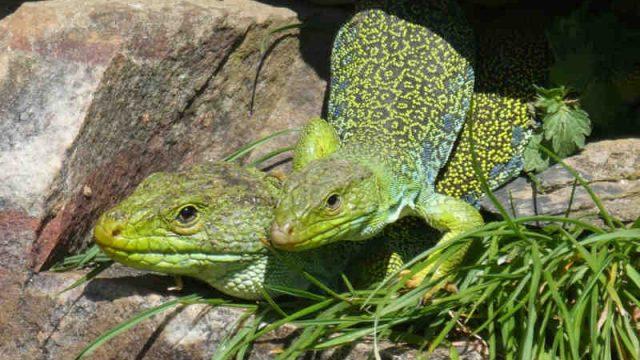 concurso-fotografia-rbale-lagartos.jpg