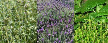 curso-plantas-aromaticas.jpg