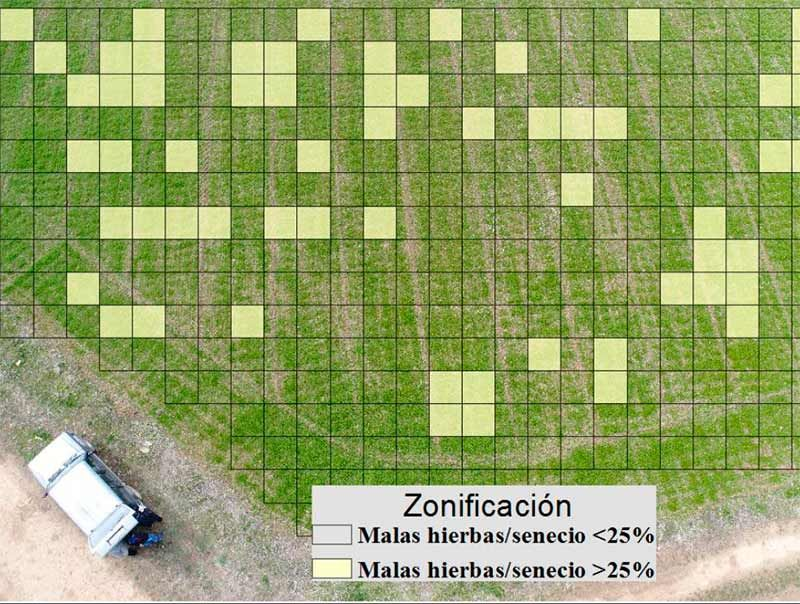 deteccion-plantas-senecio-campus-ponferrada.jpg