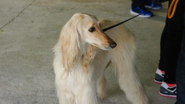 feria-mascotas-camponaraya_perro.jpg