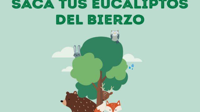 forestaalia-saca-tus-eucaliptos.jpg