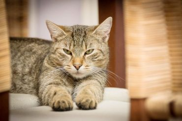 gato-covid-19.jpg