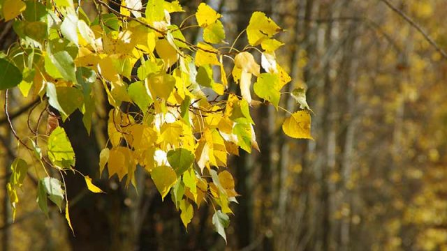 hojas-arboles.jpg