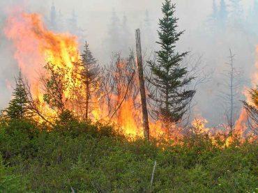 incendio-en-bosque-boreal.jpg