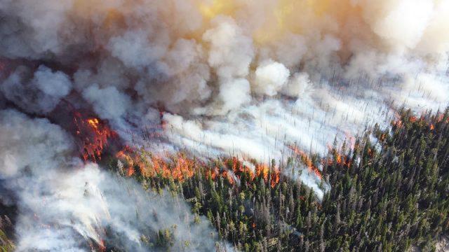 incendio-forestal.jpg