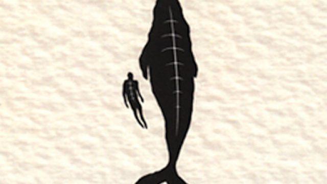 los-ballenatos.jpg