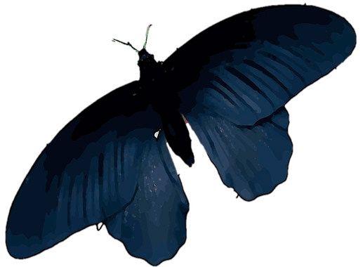 mariposa-negra.jpg