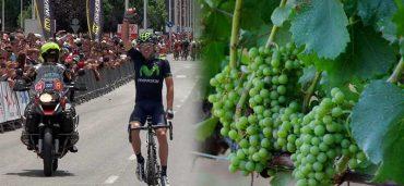 mundial-viticultura_w.jpg