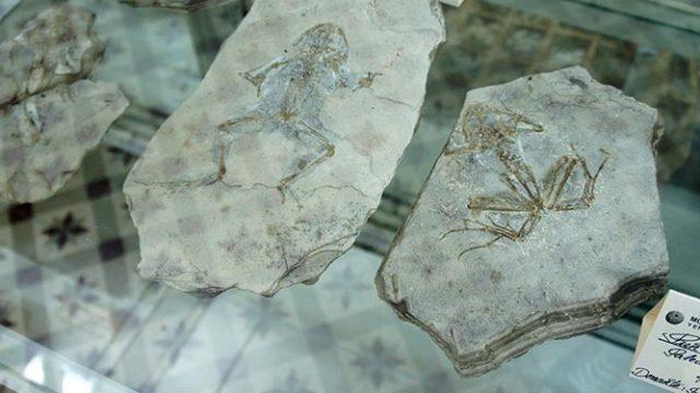 museo-ciencias-naturales-villafranca_w.jpg