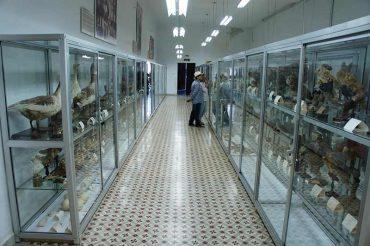 museo-de-ciencias-padres-paules-villafranca.jpg