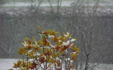 nevada-en-ponferrada.jpg
